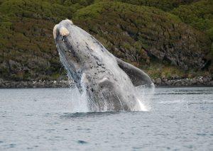 ۱۰ نهنگ (وال) بزرگ دنیا