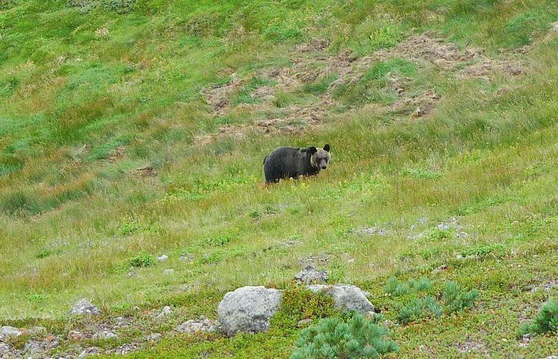 Ussuri brown bear - معرفی 12 خرس بزرگ جهان