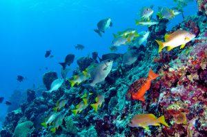 جاذبه های گردشگری جزایر برمودا