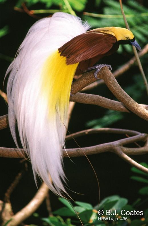 زیباترین پرندگان