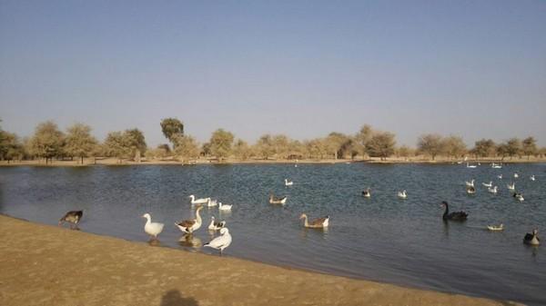 اردوگاه دبی