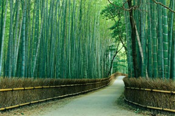 مسیر درختان بامبو، ژاپن