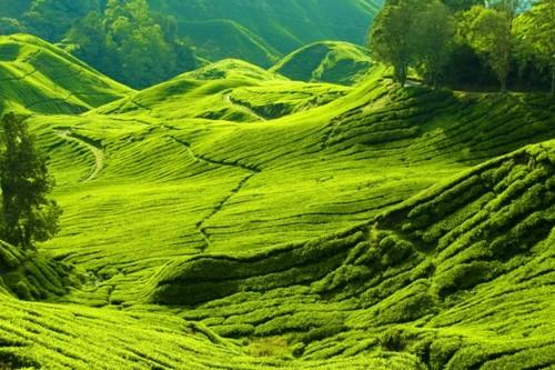 شبه جزیره مالزی