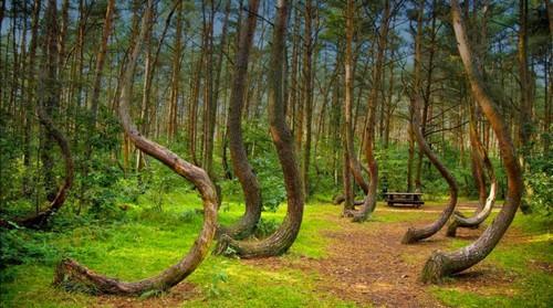 جنگل Hoia  - رومانی