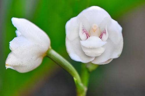گل های زیبای دنیا