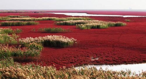 ساحل سرخ Panjin - چین
