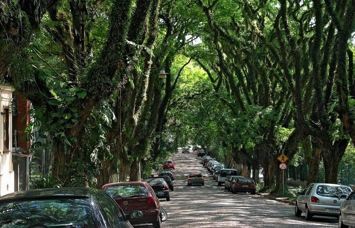تونل درخت سبز برزیل