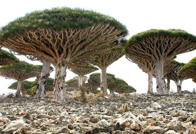 Socotra، یمن