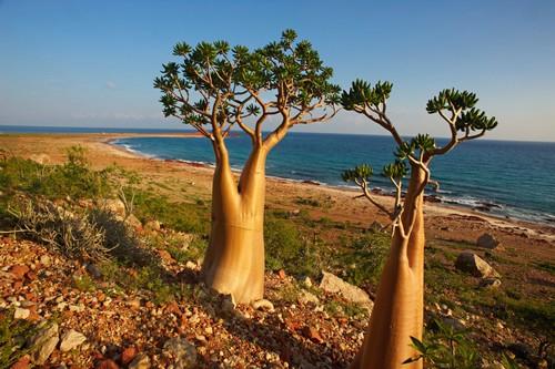 Socotra - یمن