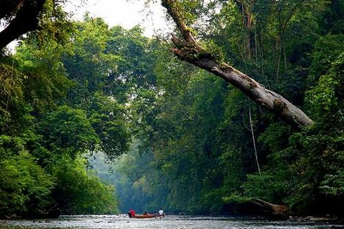 پارک ملی مالزی