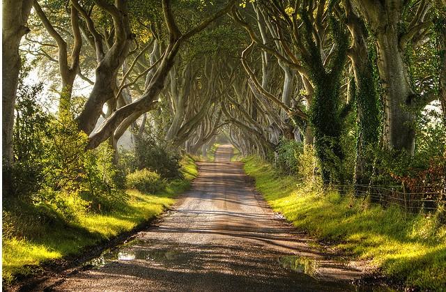 تونل درختی ایرلند شمالی