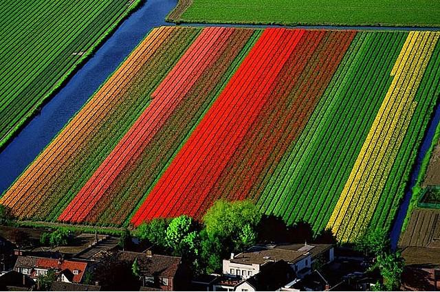 زمین های گل های لاله - Lisse، هلند