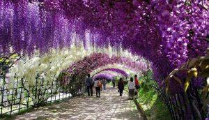 مسیرهای زیبای درختان و گلها در دنیا