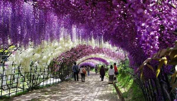 تونل گل ژاپن