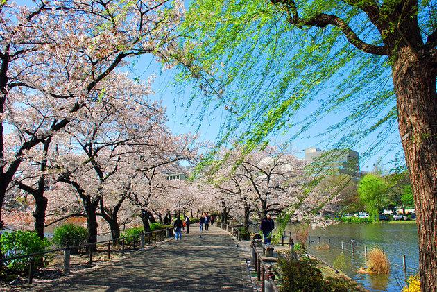 جاذبه های توکیو