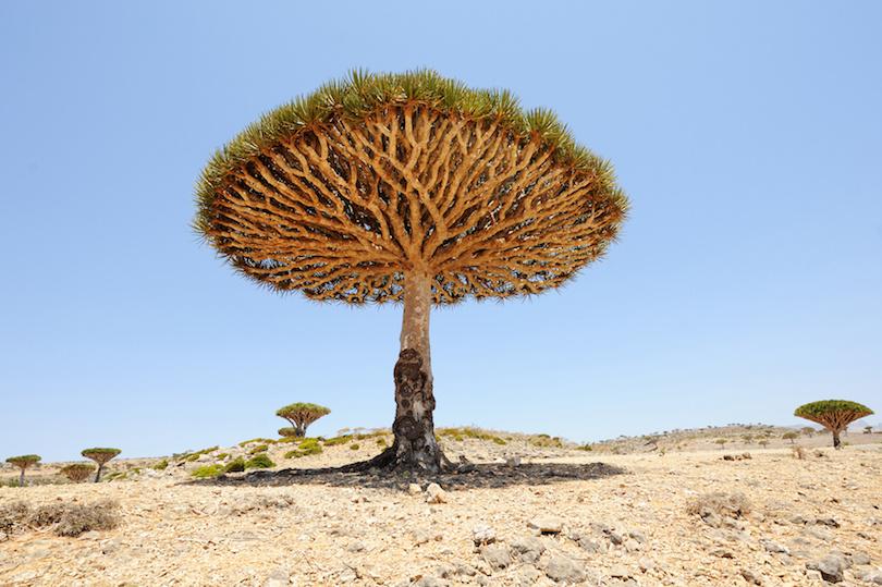 معروفترین درختان جهان