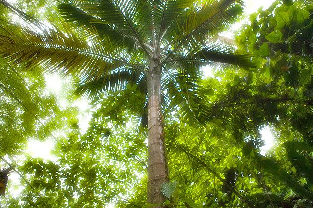 جاذبه های جزایر کارائیب