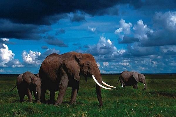 جاذبه های کشور افریقای جنوبی