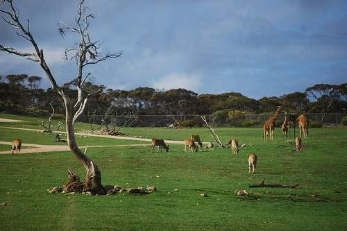 زیباترین باغ وحش های جهان