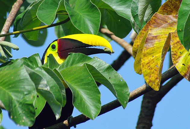 مکان های دیدنی کاستاریکا