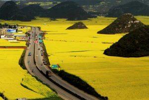 منظره طلایی بوته های کلزا در Luoping، چین