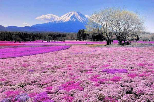 جاذبه ژاپن