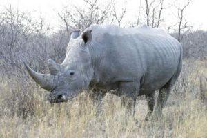 بهترین جاذبه های بوتسوانا
