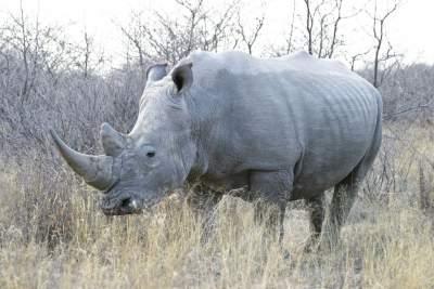 جاذبه های بوتسوانا