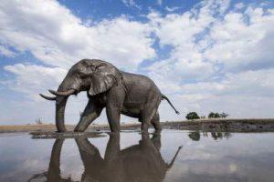 جاذبه های کشور آفریقایی ناشناخته بوتسوانا
