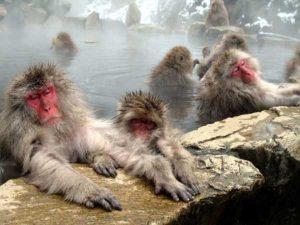 جاذبه های طبیعی کشور ژاپن