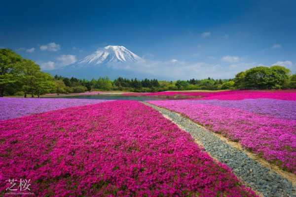جاذبه طبیعی ژاپن