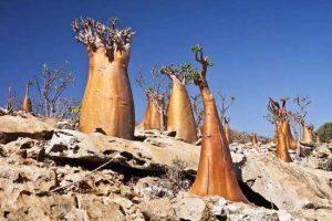 جاذبه های شگفت انگیز و توریستی یمن