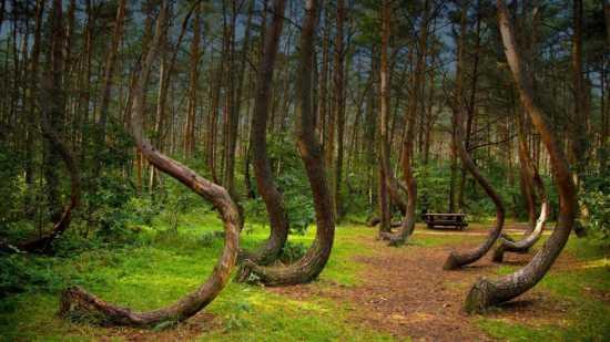 جنگل مرموز لهستان