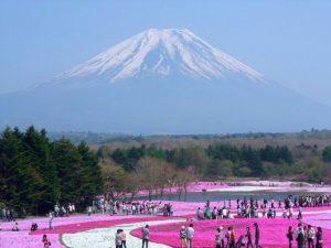گزارش تصویری از پارک زیبای Flowery منطقه هیتاچی ژاپن