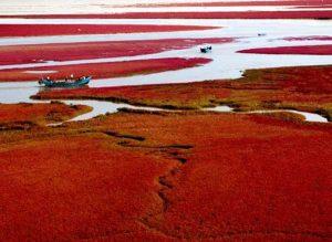 ساحل باورنکردنی سرخ چین