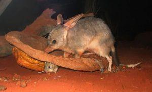 ۹ حیوان شگفت انگیز استرالیا