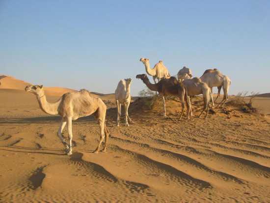 دیدنی های کشور لیبی