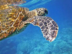 ۱۰ حیوان زیبای در حال انقراض