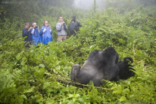 کوه گوریل کنگو
