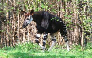 ۱۰ حیوان شگفت انگیز آفریقا