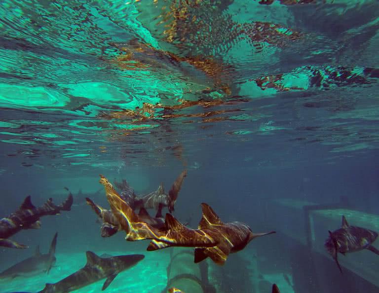 جاهای دیدنی زیر آب