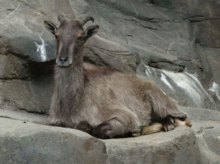 حیوانات هیمالیا