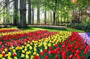 محبوب ترین جاذبه های گردشگری هلند