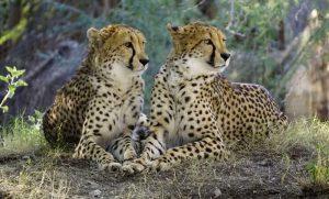 سریع ترین حیوانات در روی زمین