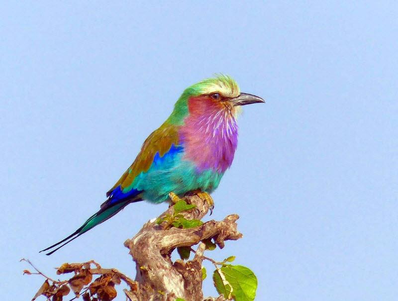 پرنده های رنگی