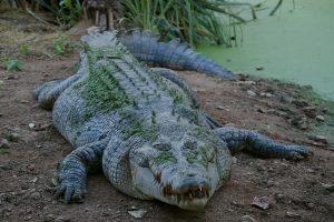 سنگین وزن ترین جانداران کره زمین !