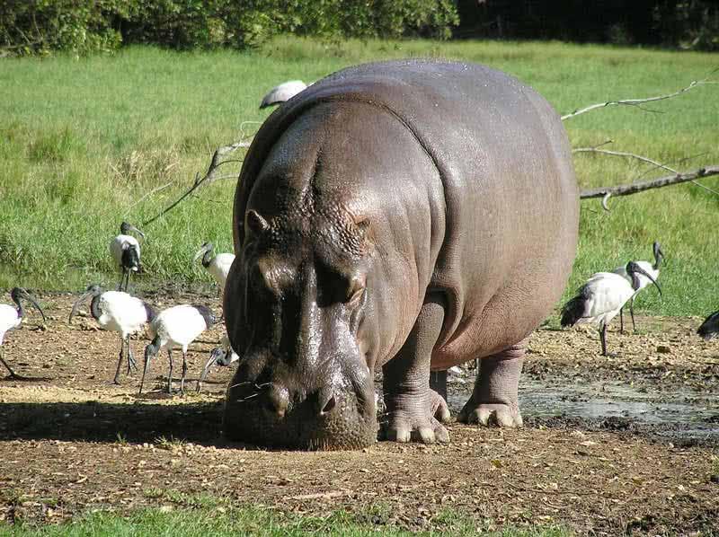سنگین وزن ترین جانداران کره زمین
