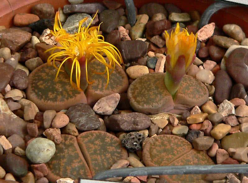 عجیب ترین گیاهان و گل های دنیا