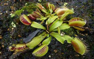 عجیب ترین گیاهان دنیا !