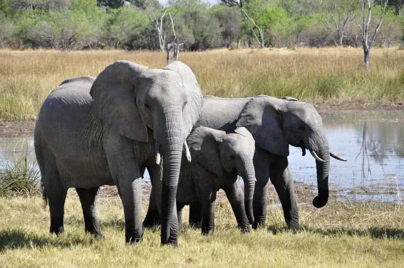 حیواناتی که طولانی ترین دوره حاملگی را دارند